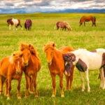 Horse Quartet